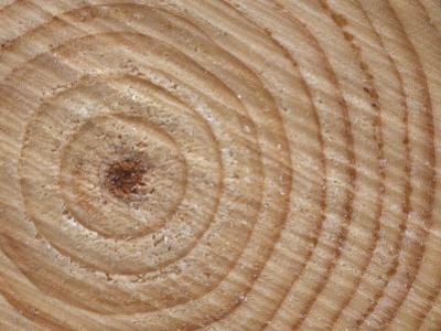 Growth Rings in Trunk of Spruce Tree, Norway