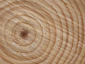 Growth Rings in Trunk of Spruce Tree, Norway by Pete Cairns