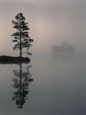 Lone Scots Pine, in Mist on Edge of Lake, Strathspey, Highland, Scotland, UK by Pete Cairns