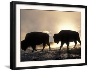 Two Bison Silhouetted Against Rising Sun, Yellowstone National Park, Wyoming, USA by Pete Cairns