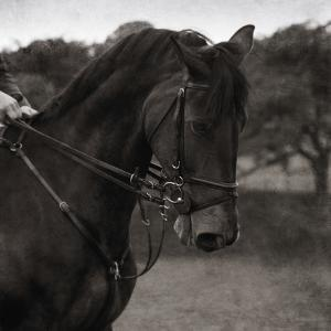Dressage - The Collection by Pete Kelly
