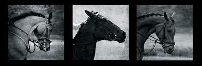Horse Triptych by Pete Kelly