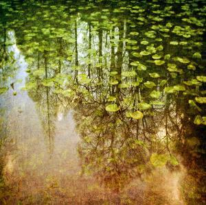 Lily Pond by Pete Kelly