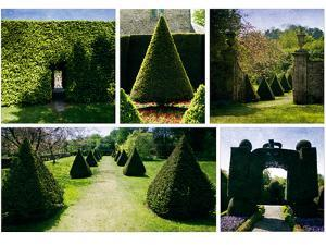 Topiary by Pete Kelly