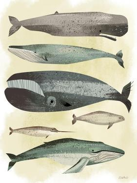 Whales by Pete Oswald