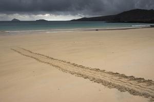 Galapagos Green Sea Turtle Tracks. Floreana Island, Galapagos, Ecuador by Pete Oxford