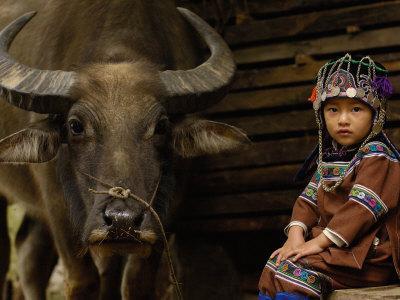 Hani Child and Water Buffalo for Ploughing Rice Paddies, Yuanyang, Honghe Prefecture, China