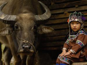 Hani Child and Water Buffalo for Ploughing Rice Paddies, Yuanyang, Honghe Prefecture, China by Pete Oxford