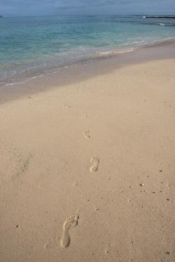 Las Bachas Beach, Santa Cruz Island, Galapagos Islands, Ecuador by Pete Oxford