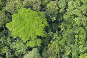Rainforest Canopy, Yasuni NP, Amazon Rainforest, Ecuador by Pete Oxford