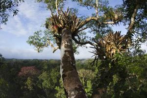 Rainforest Canopy. Yasuni NP, Amazon Rainforest, Ecuador by Pete Oxford