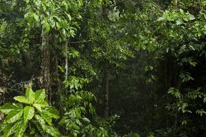 Rainforest Rain Storm, Yasuni NP, Amazon Rainforest Ecuador by Pete Oxford