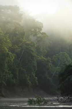 Tiputini River Scenic, Yasuni NP, Amazon Rainforest Ecuador by Pete Oxford