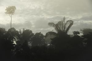 Tiputini River Scenic, Yasuni NP, Amazon Rainforest, Ecuador by Pete Oxford