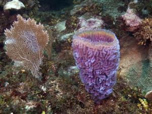 Xcalac Marine Reserve, Mahahual Peninsula, Quintana Roo, South Yucatan Peninsula, Mexico by Pete Oxford
