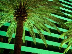 Green Hued Palm Tree on the Las Vegas Strip Is Lit Up at Night by Pete Ryan