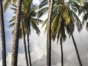 The Midsection of a Group of Palm Trees on the Island of Molokai by Pete Ryan