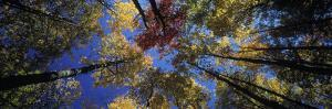 Autumn Trees by Peter Adams