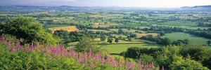 Cotswolds, Gloucestershire, England by Peter Adams