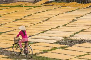 Cycling Past Drying Sheets of Mien Noodle, Nr Hanoi, Vietnam by Peter Adams