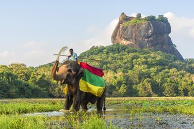 Elephant ride with Lion Rock, Ancient Rock Fortress behind, Sigiriya, Sri Lanka by Peter Adams