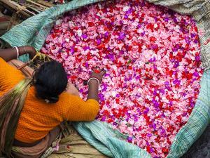 Flower Market, Kolkata (Calcutta), India by Peter Adams