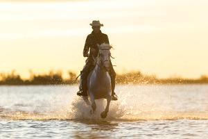 Gardian, Cowboy and Horseman of the Camargue, Camargue, France by Peter Adams
