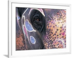 Goa, India, Close-up of Elephants Eye by Peter Adams