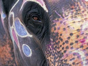 Goa, India, Close-up of Elephants Eye by Peter Adams