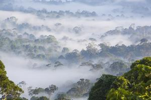 Mist, over Tropical Rainforest, Early Morning, Sabah, Borneo, Malaysia by Peter Adams