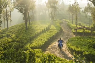 Motorcyclist, Tea Estate & morning mist, Hapatule, Southern Highlands, Sri Lanka by Peter Adams
