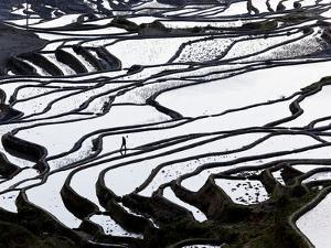 Reflections Off Water Filled Rice Terraces, Yuanyang County, Honghe, Yunnan Province, China by Peter Adams