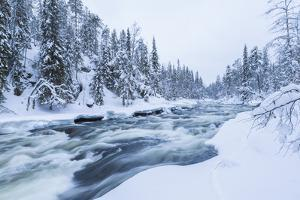 River, Juuma, Oulankajoki National Park, Kuusamo, Finland by Peter Adams