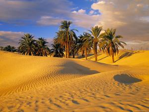 Sand Dunes and Oasis, Desert, Tunisia by Peter Adams
