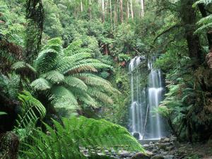 Triplet Falls, Victoria, Australia by Peter Adams