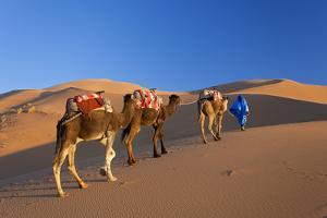 Tuareg Camel Train, Sahara Desert, Morocco by Peter Adams