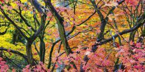 Vibrant Autumn by Peter Adams
