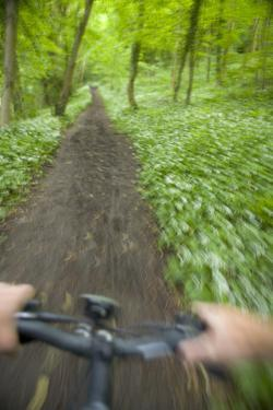 View from Bicycle Along Wooded Track, Uley, Gloucestershire, England by Peter Adams