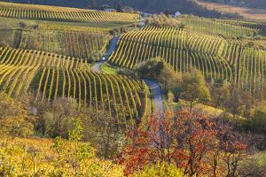Vineyards, Near Alba, Langhe, Piedmont, Italy by Peter Adams