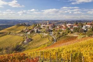 Vineyards, Treiso, Alba, Langhe, Piedmont, Italy by Peter Adams