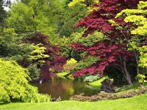 Acer Trees and Pond in Sunshine, Gardens of Villa Melzi, Bellagio, Lake Como, Lombardy, Italy by Peter Barritt