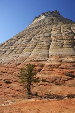 Checkerboard Mesa, Formed of Navajo Sandstone, Zion National Park, Utah, United States of America by Peter Barritt