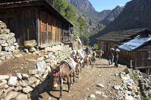 Mule Train Between Phakding and Namche, Everest Base Camp Trek, Solukhumbu, Nepal, Himalayas, Asia by Peter Barritt