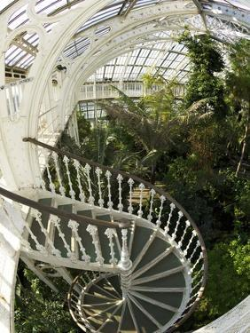 Staircase in Temperate House, Royal Botanic Gardens, UNESCO World Heritage Site, London, England by Peter Barritt