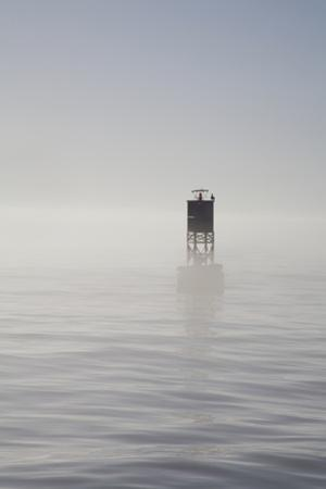 Buoy with Sea Lions, Long Beach Harbor, California, USA by Peter Bennett