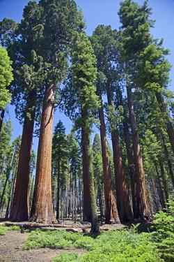 Sequoia National Park, California, USA by Peter Bennett
