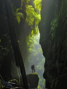 Mammoth Ferns Flourish Between the Narrow Walls of Claustral Canyon by Peter Carsten