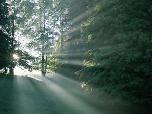 Morning Sunlight Casts Hazy Beams Through a Forest in Bavaria by Peter Carsten