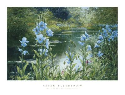 Blue Poppies by Peter Ellenshaw