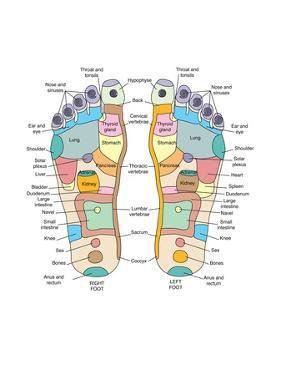 Reflexology Foot Map, Artwork by Peter Gardiner